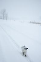 雪の線路の上を歩く猫