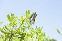 植物にとまるチョウ 20021007260| 写真素材・ストックフォト・画像・イラスト素材|アマナイメージズ