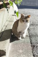 ネコと道 20021007263| 写真素材・ストックフォト・画像・イラスト素材|アマナイメージズ