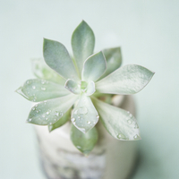 多肉植物 20021007280  写真素材・ストックフォト・画像・イラスト素材 アマナイメージズ