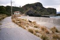 沖縄の慶留間島で出会った慶良間鹿
