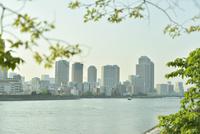 草越しに望む隅田川とビル群
