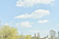 スカイツリーと木と雲