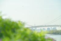 草越しに望むレインボーブリッジと東京タワー