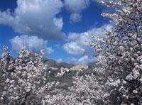 View to the village through almond trees