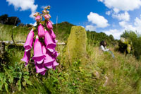 Foxglove plant growing on valley wall