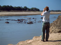 Looking at hippos in the Luangwa River