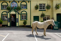 Man in pub doorway looking at horse