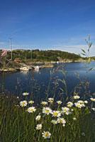 Wildflowers on Flaton Island shore