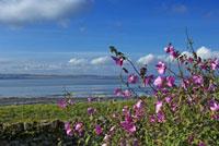 Northumberland coastline viewed from Lindisfarne