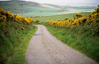 Lane near Mull of Kintyre