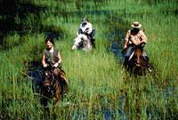 Horse safari 20023003461| 写真素材・ストックフォト・画像・イラスト素材|アマナイメージズ