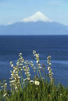 Osorno volcano Lake Llanquihue
