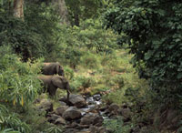 Elephants beside a small river