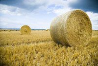 Hay bales in field at coast