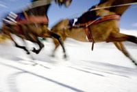 Ski joring race 20023003852| 写真素材・ストックフォト・画像・イラスト素材|アマナイメージズ