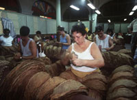 Selecting different grades of tobacco