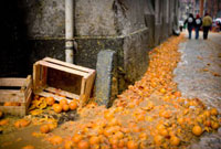A river of oranges after Orange Festival