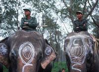 Elephant Polo 20023004045| 写真素材・ストックフォト・画像・イラスト素材|アマナイメージズ