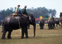 Elephant Polo,World Championships