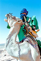 Tuareg nomad mounting a bad tempered camel in Sahara Desert
