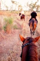 Horse riding 20023004126| 写真素材・ストックフォト・画像・イラスト素材|アマナイメージズ