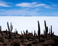 Uyuni salt flat and cacti