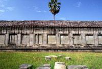 Palm tree and wall at Angkor Wat