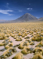 Grasslands towards volcano in the Andes