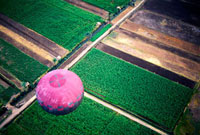 Pink hot air balloon with fields below,Aerial View