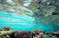 View of coral in shallow waters