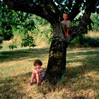 Young boy and girl in walnut tree