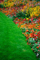 Colorful flowers and grass in Paris,close-up