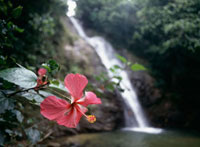 Flower at Savu na mate laya waterfall