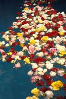 Flowers floating in water during  Semana Santa