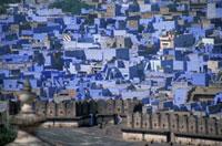 Blue buildings in Jodhpur