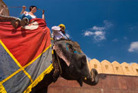 Mahout and tourist on elephant at Amber Fort,Side View