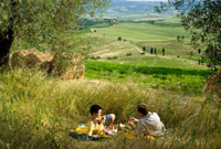 Couple having picnic beside olive trees looking over the cou