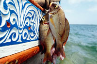 Fish hanging off of fishing boat,close up