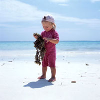 Child inspecting seaweed on beach