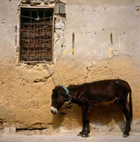 Donkey and window in medina