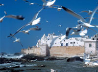 Seagulls flying towards whitewashed city walls