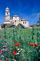 Santa Maria del Manzano and wild flowers