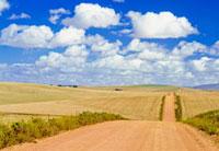 Rural road between fields
