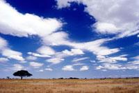 Single tree on Serengeti plains
