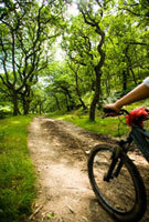 Female cyclist riding through woods
