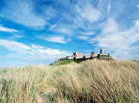Looking over long grass to Bamburgh Castle