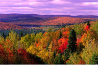 Trees and Mountains in Autumn La Mauricie National Park Queb