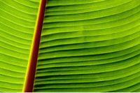 Close-Up of Palm Frond South Africa
