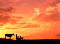 Silhouette of Farmer with Horse At Sunset
